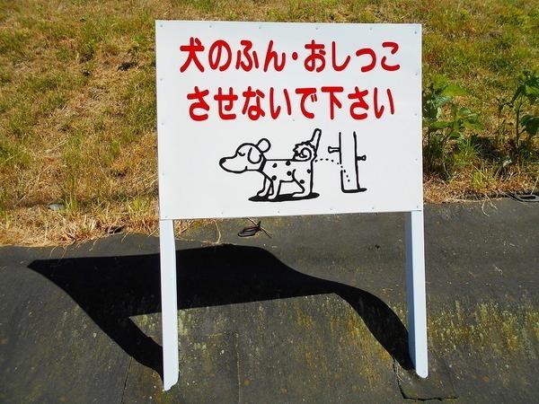 立て看板 犬のフンお断りのアイキャッチ画像
