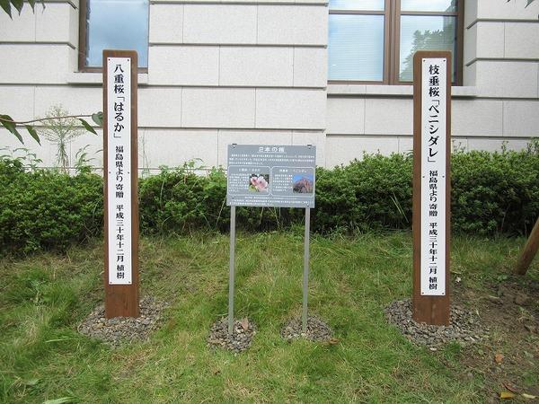 2本の桜 記念植樹看板設置