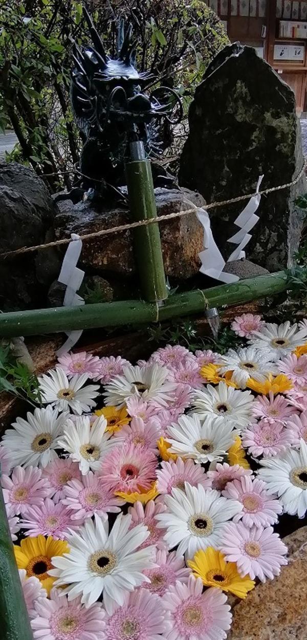 御上神社 かわいい花手水